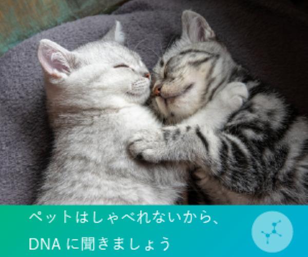 ペットの遺伝子検査サービス「Pontely」