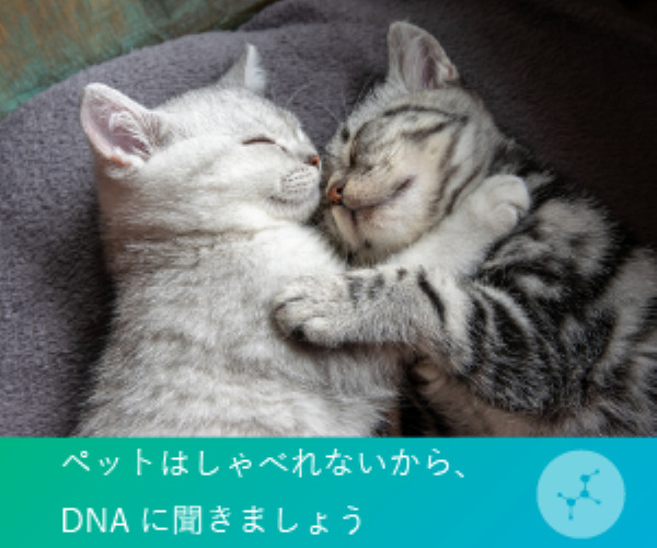 WEBで結果確認可能な猫遺伝子検査 【Pontely】