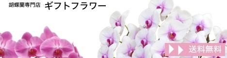 胡蝶蘭専門店【ギフトフラワー】